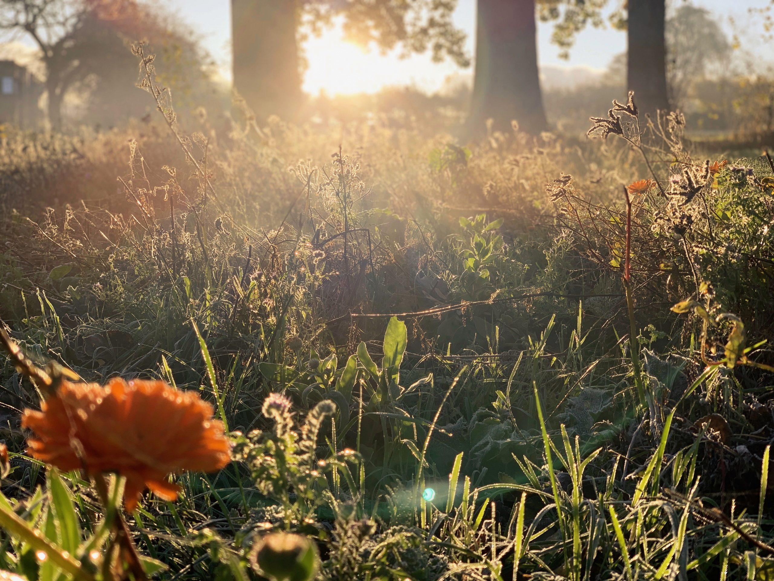 Sundasacker Morgendliche Herbstimpressionen 1 Event Nature scaled