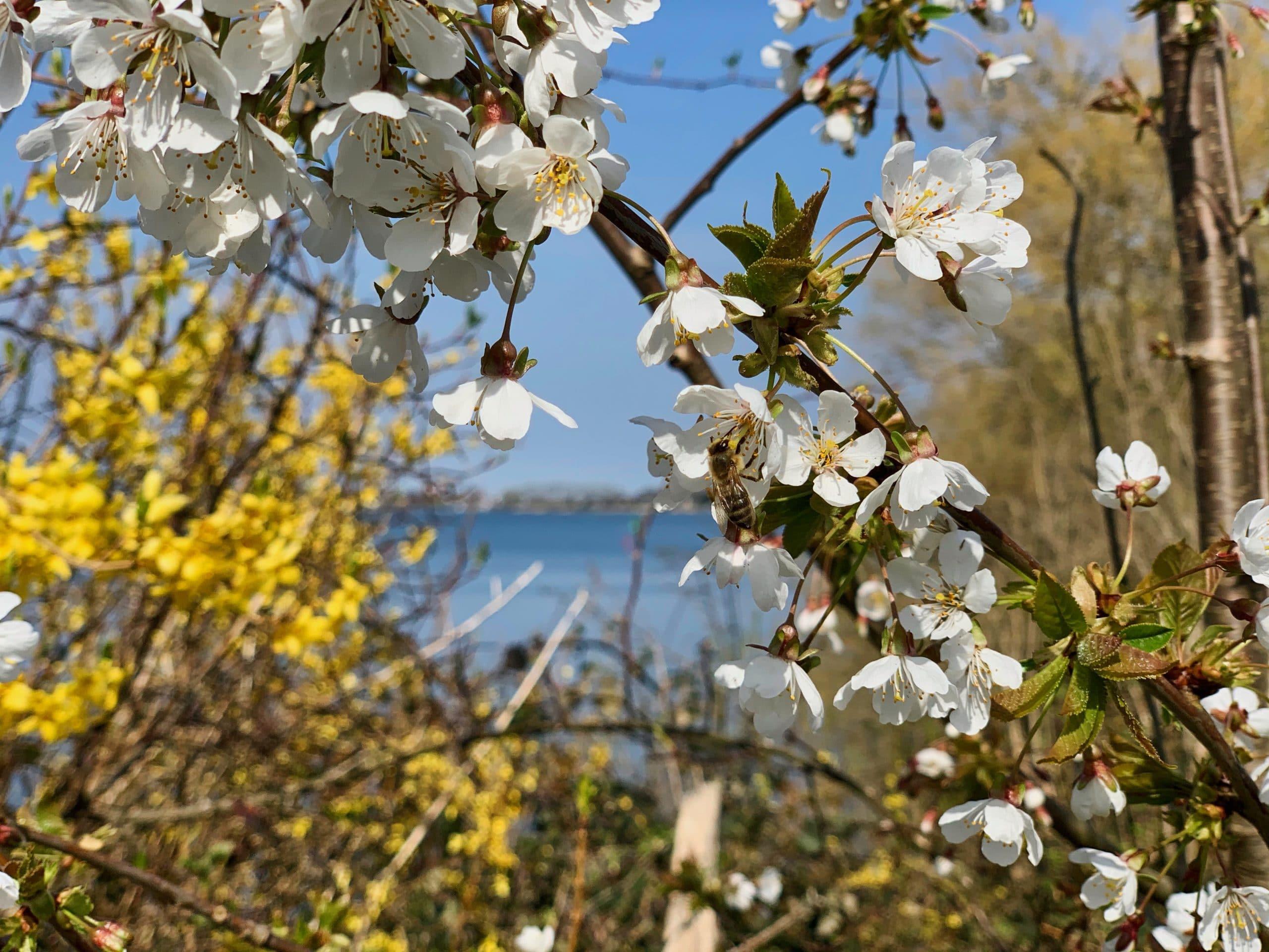 Ostern 2020 an der Schlei Event Nature scaled